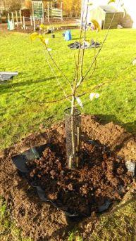 individual-tree